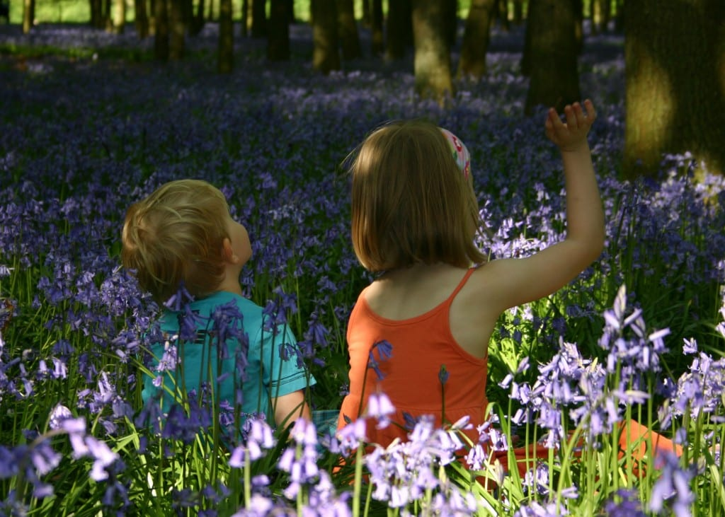 Breathtaking Bluebells!