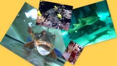 """""""London Aquarium"""""""