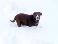 """Snow Dog"""