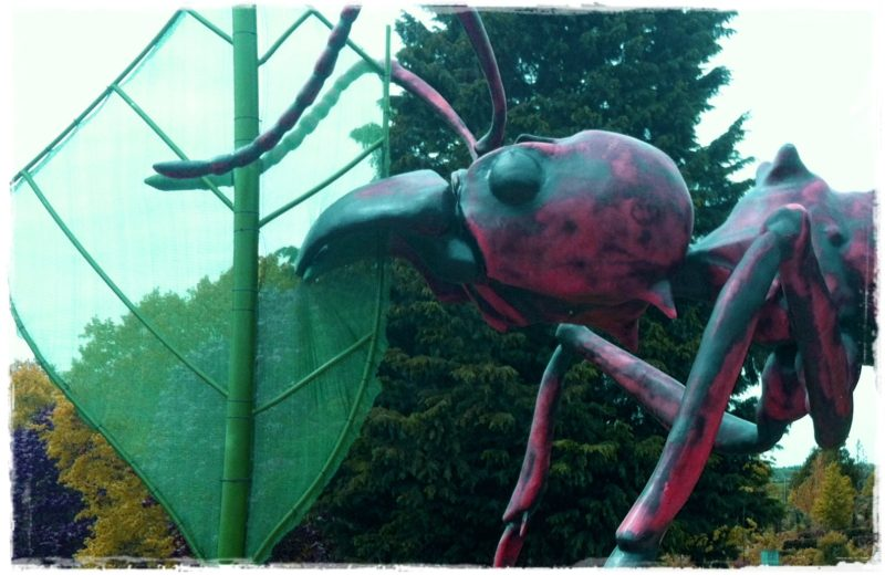 """""""leafcutter ant"""""""