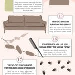 20 facts you need to know about head lice