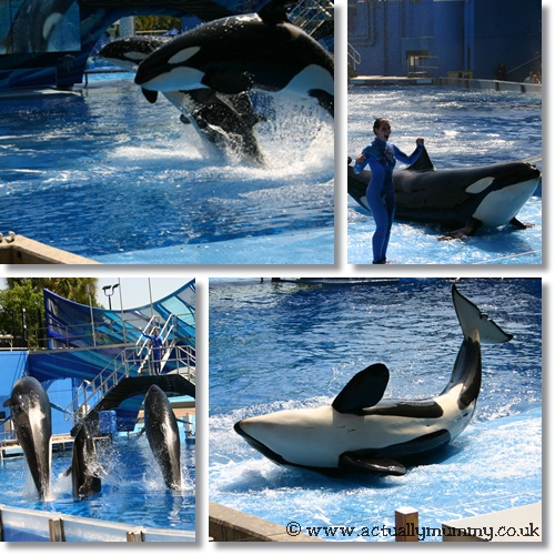 When I grow up I want to be a whale trainer at Shamu Rocks