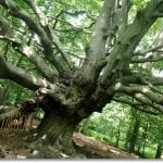 Days Out: Visit the Whomping Willow of Harry Potter fame