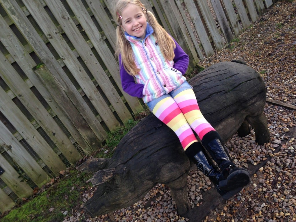 Animal Farm at Aldenham Country Park