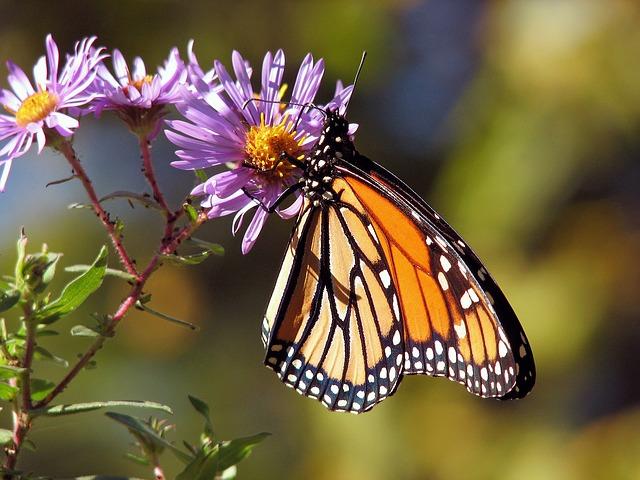 Wot so Funee? Pre-school butterflies