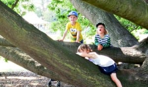 Climbing trees is obligatory at Kew Gardens