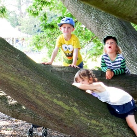 Climbing trees is obligatory at Kew Gardens