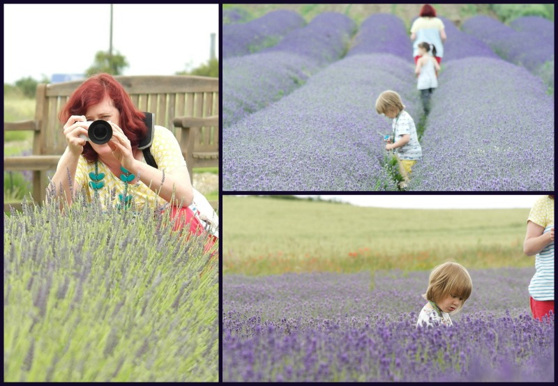 Hitchin Lavender Farm with Annie from Manneskjur