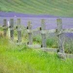 Hitchin Lavender Farm #HDYGG