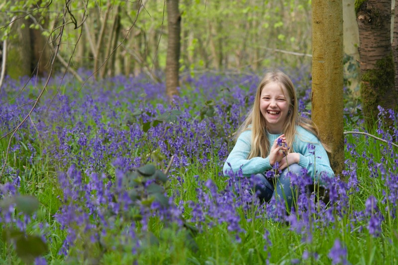 Where to see bluebells in Hertfordshire - the woods at Batchwood in St Albans are spectacular