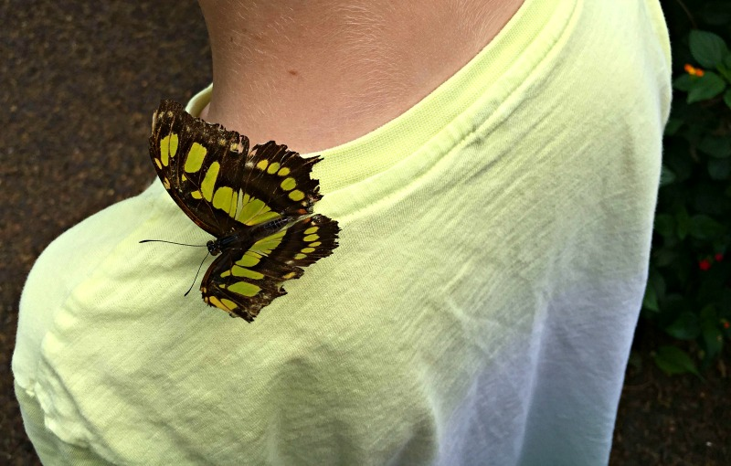 The butterfly house at Whipsnade zoo almost always results in you becoming a perch for these exotic creatures