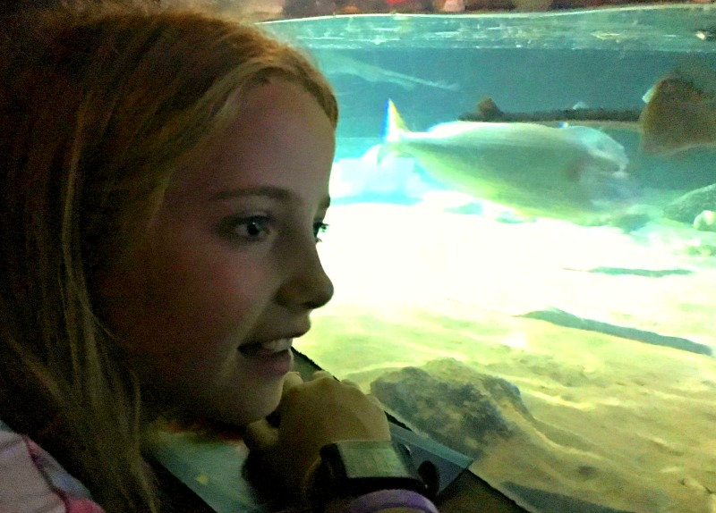 Seeing the rays is always a thrill at the London aquarium