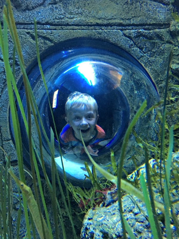 Days Out: SEA LIFE London Aquarium
