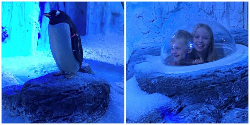 There are now penguins at the London aquarium