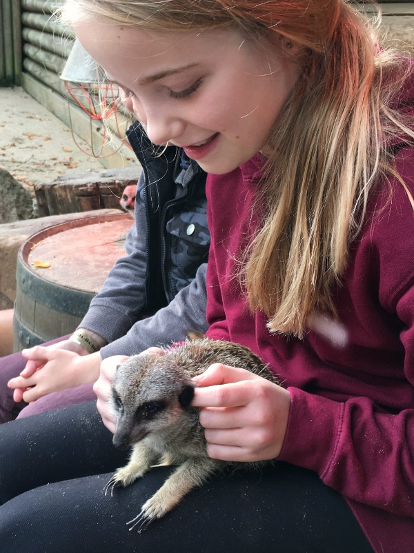 Getting cuddly with the animals at the Meet the Meerkat experience at Paradise Wildlife park