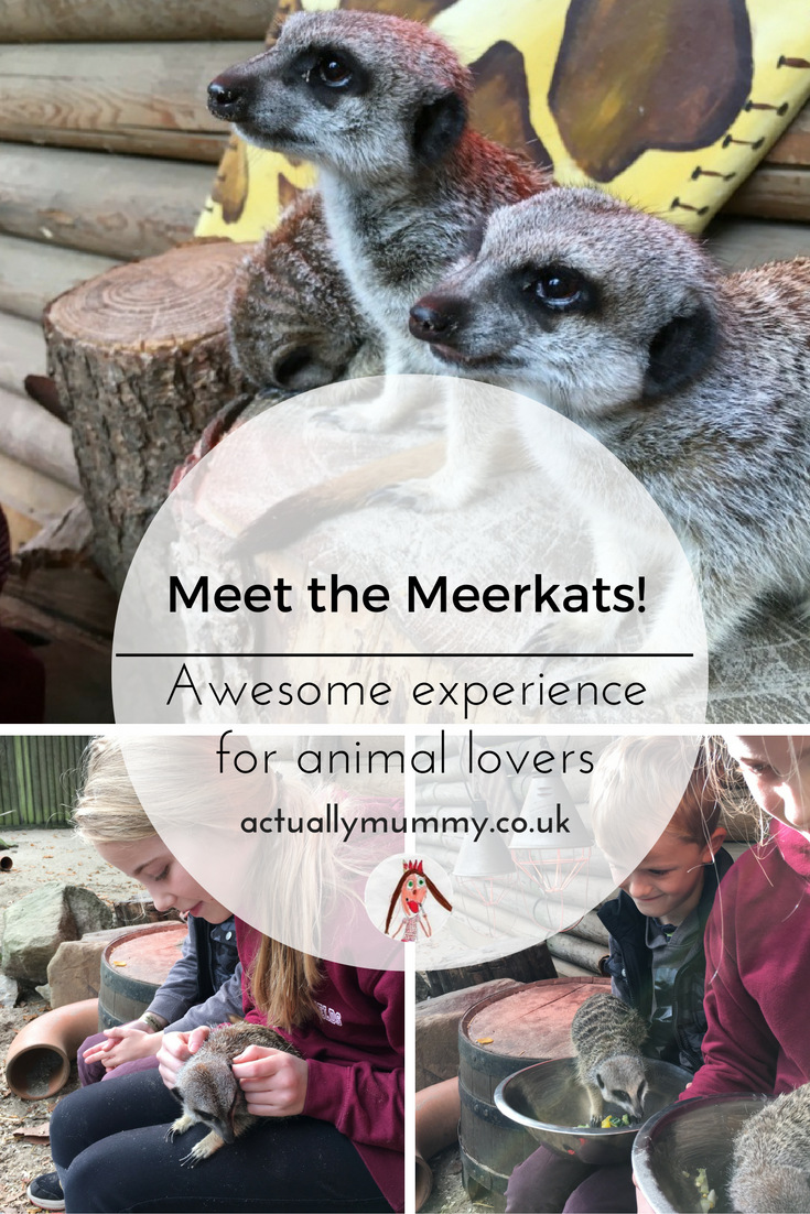 The Meet the Meerkats experience at Paradise Wildlife Park is a very special thing to do with a child who is an animal lover. Click through to find out more