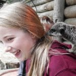 Meet Meerkats: Fall in Love (review of Paradise Wildlife Park)