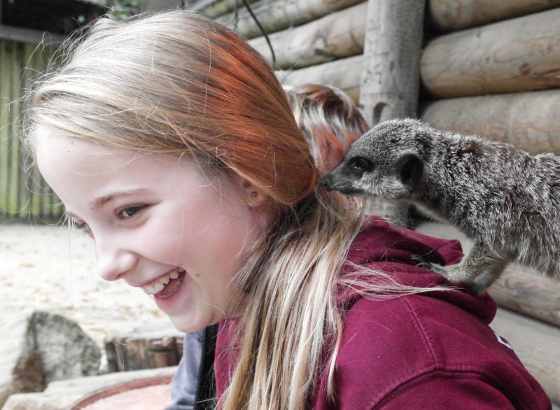 The meet the meerkats experience at Paradise Wildlife park is a very special treat