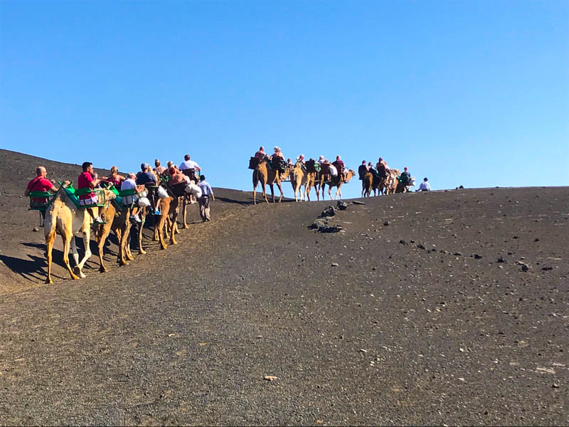 Ride a camel around the volcanic landscape of Timanfaya National park in Lanzarote